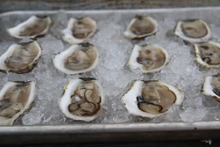 Island Creek Oysters, Duxbury MA - Edible South Shore