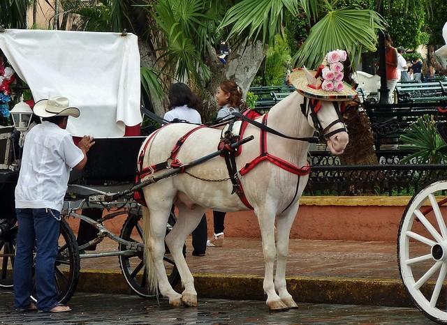 MEXICO, Yucatán, Merida, Kutsche vor dem Rathaus , 19065/11725