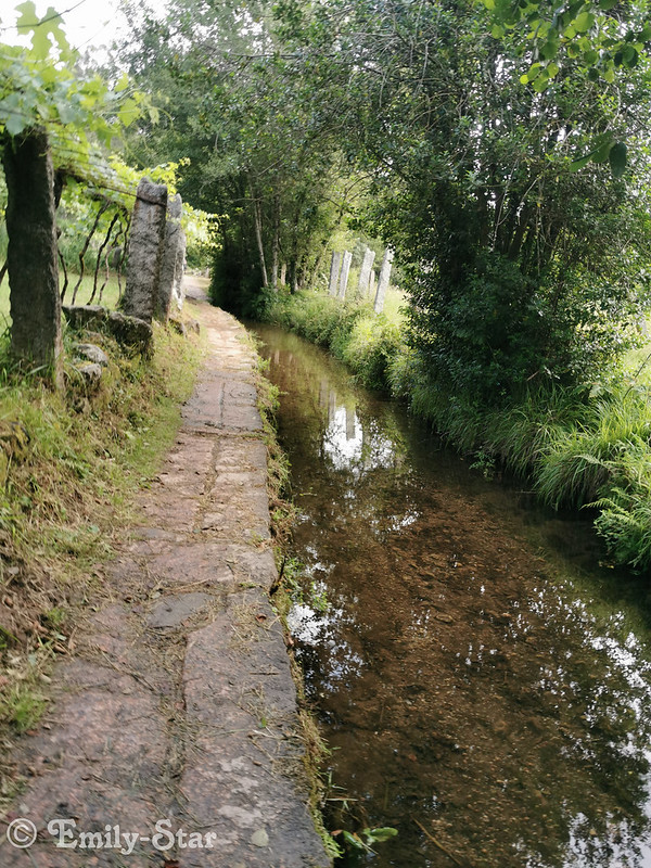 Camino Portugues - Tag 9-114831