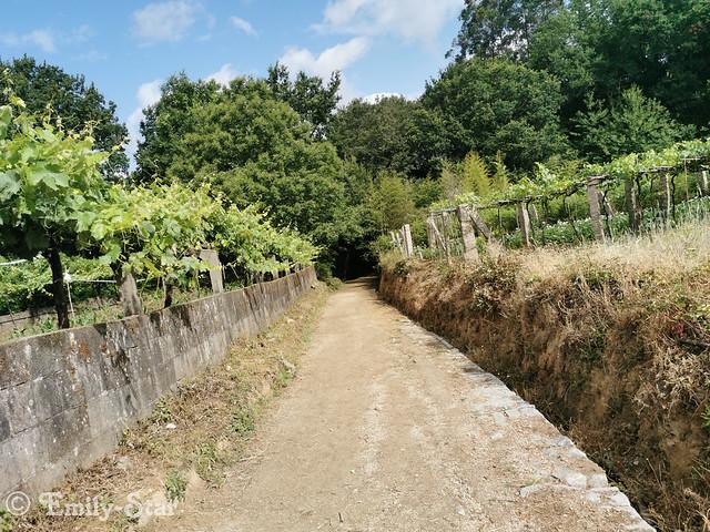 Camino Portugues - Tag 9-112325