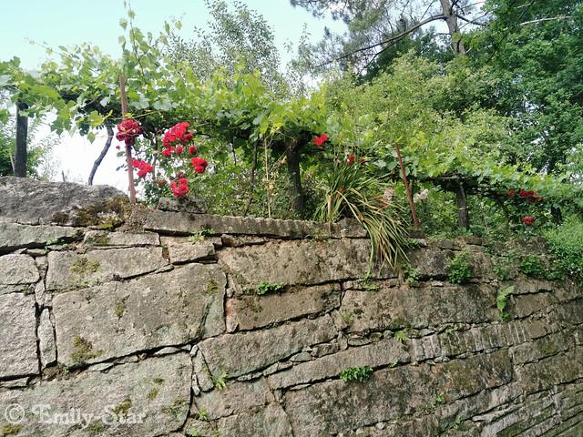 Camino Portugues - Tag 9-114528