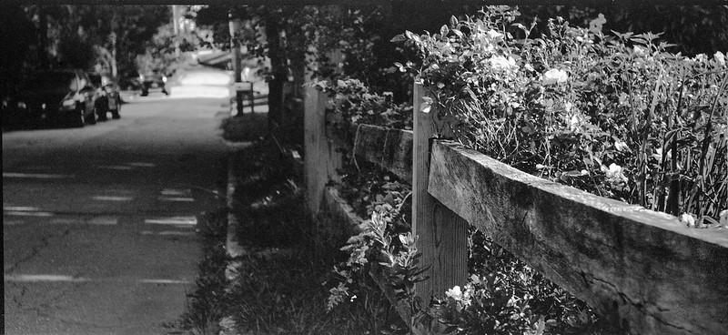 floral forms, split rail fence, Blue Ridge Avenue, Asheville, NC, No. 3A Ansco Folding Buster Brown, Arista.Edu 200, HC-110 developer, 7.10.19
