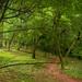 Forest allée (03)