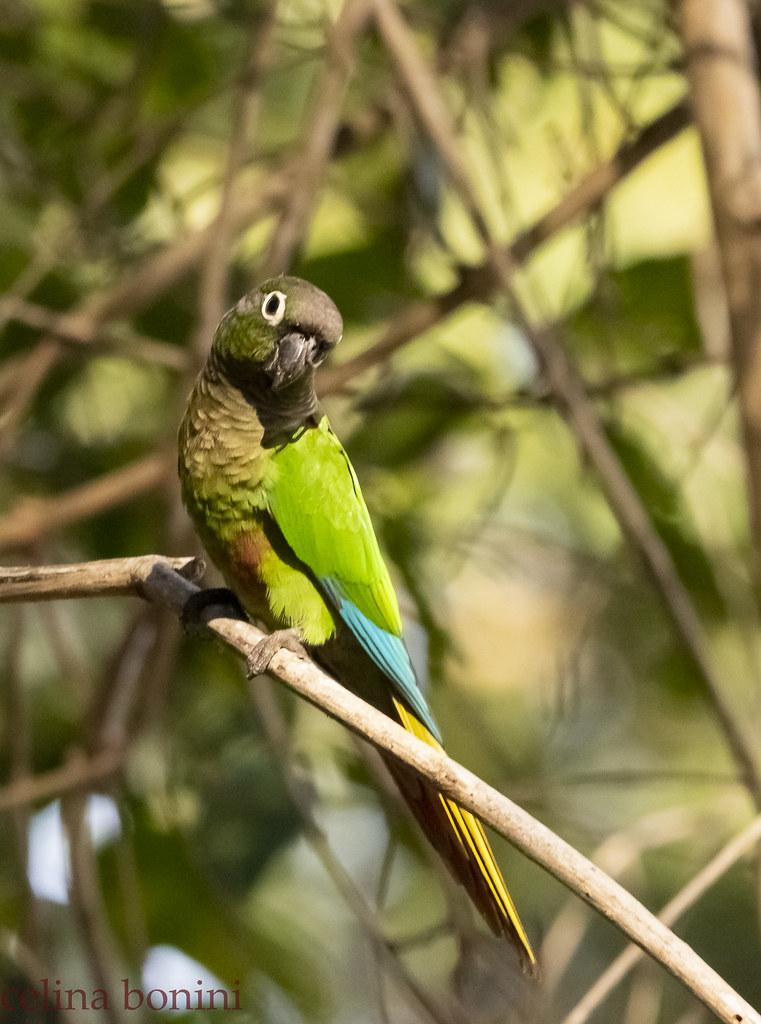 Fauna de Pantanal, Brasil