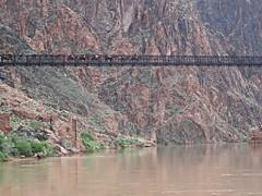 Mules on Kaibab Bridge - Grand Canyon