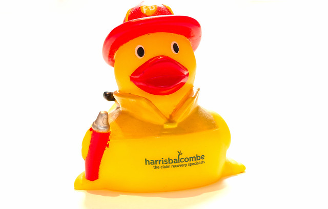 Harris the duck ready for another day at the office
