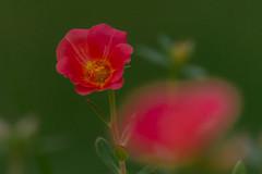 Flower-01604