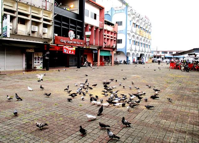 Rejang Park pigeons