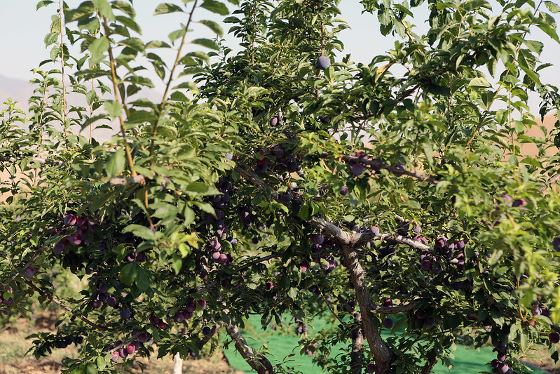 Лидер нации Эмомали Рахмон посетил сад «Чашмаи нукра» Дангаринского района