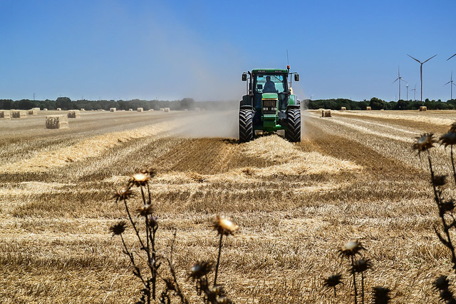 Ciri Tiempo de cosecha