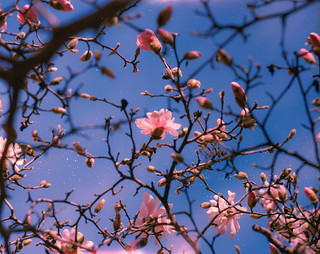 Spring Heartbeat