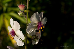 white flower 6249