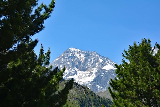 Il Gran Zebrù (Königsspitze) tra i pini della Val Rosim