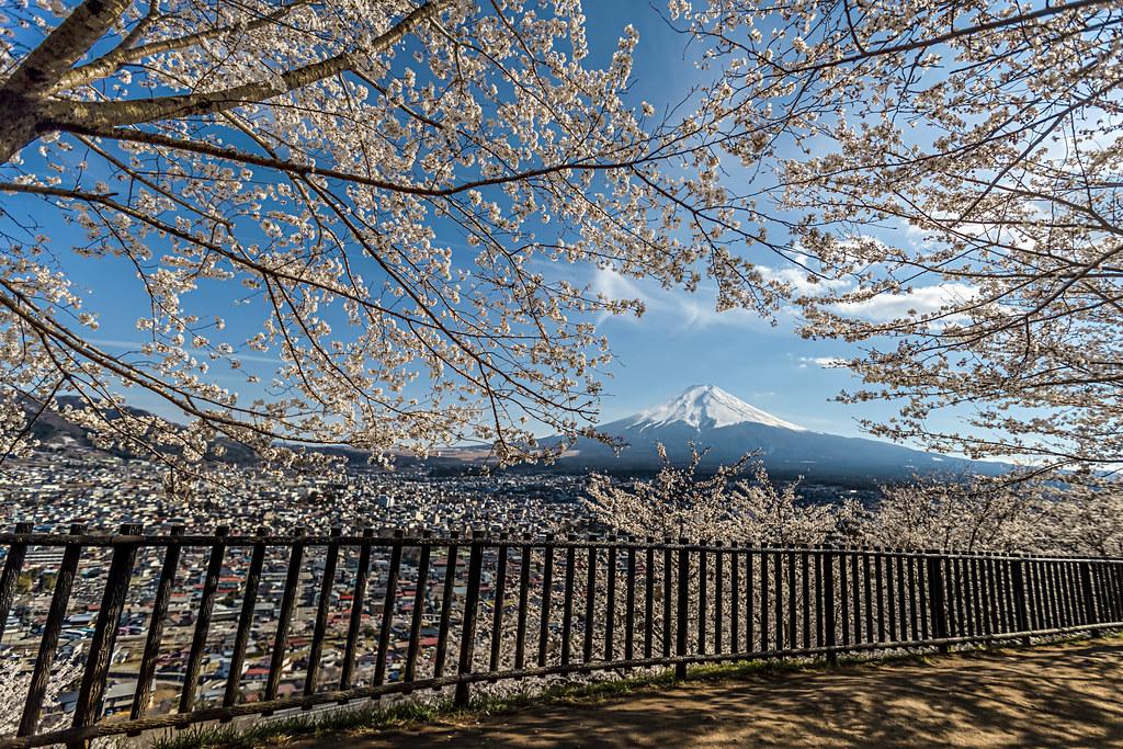 新倉山淺間神社