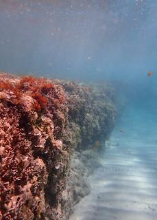 Underwater Cliff
