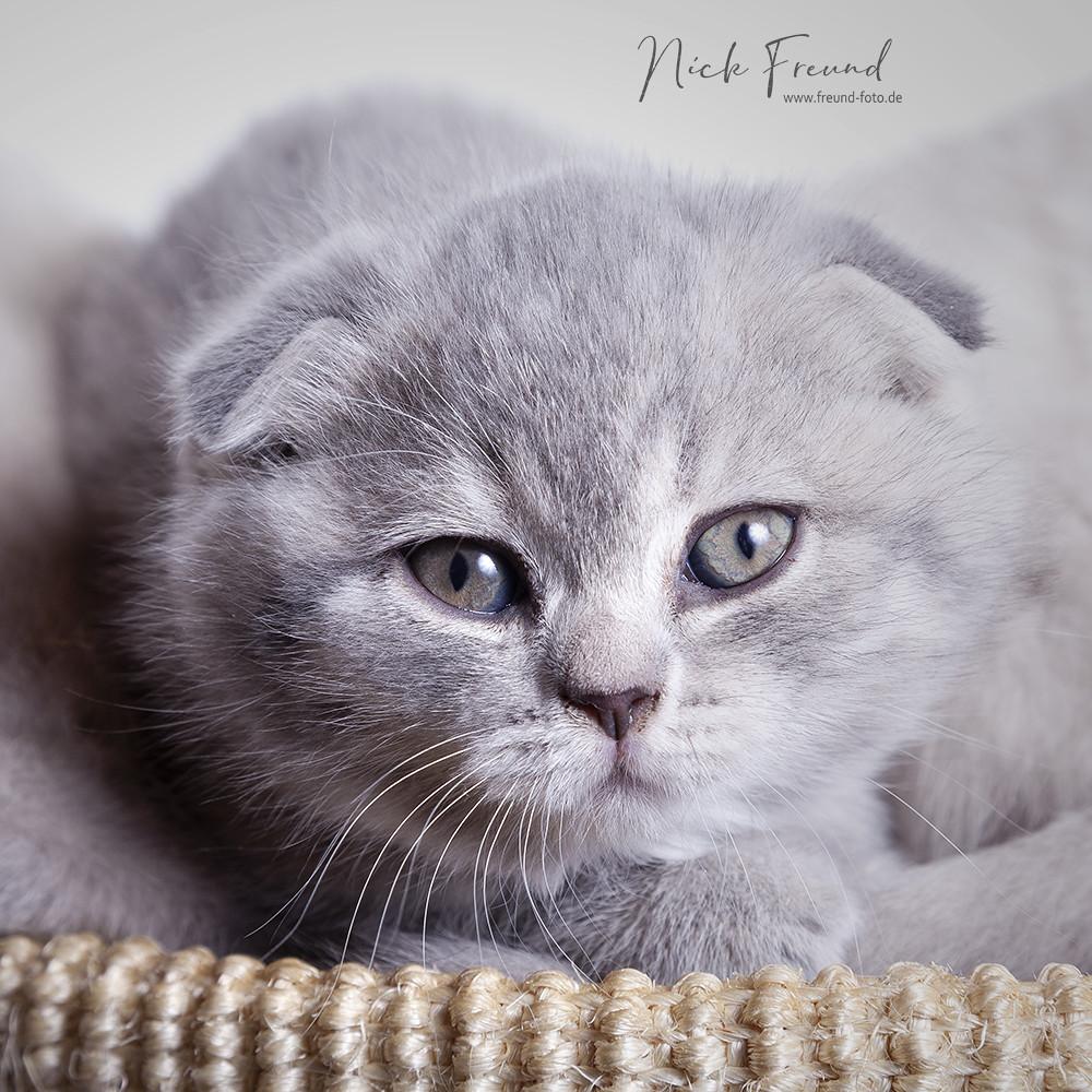 baby katzen bilder  vorlagen zum ausmalen gratis ausdrucken