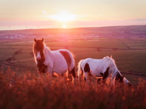 rocks horse bodminmoor sunset pony m43 microfourthirds panasonic microfournerds lumix olympus45mmf18 cornwall gx8 roughtor
