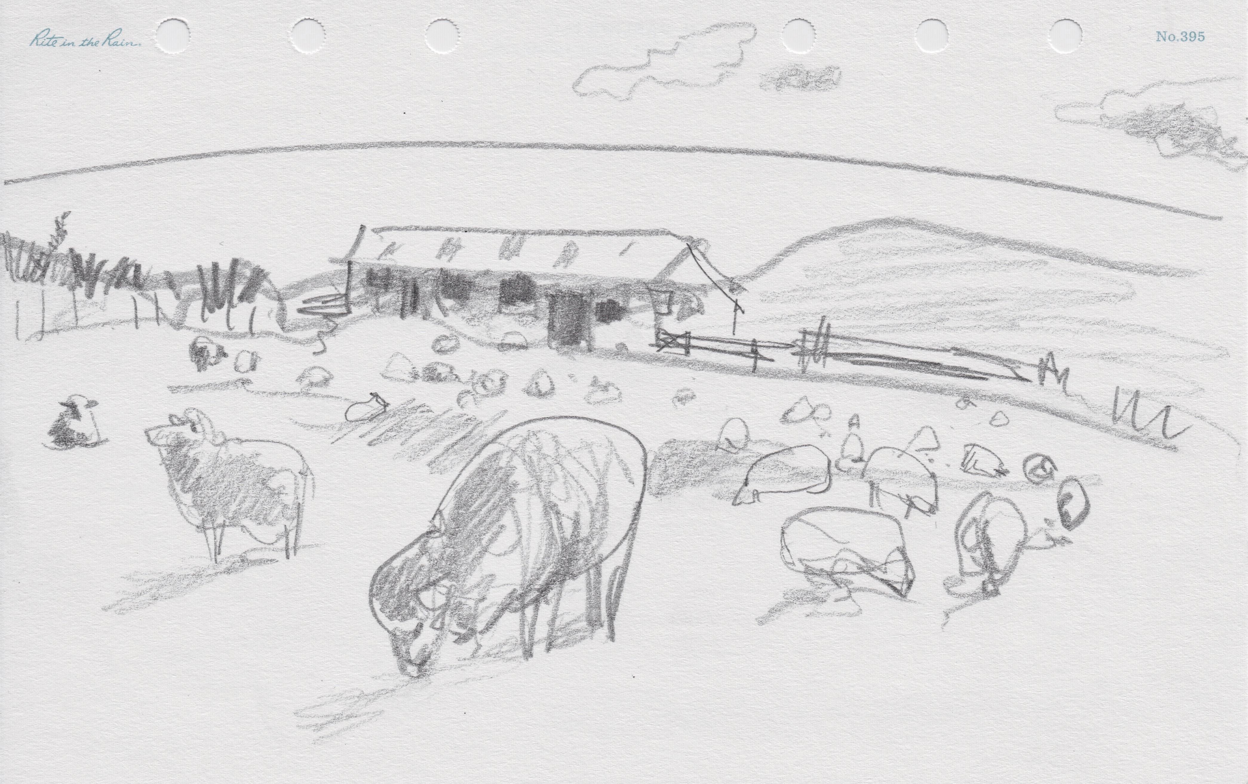 Sketches from Seabirdland - Open Explorer