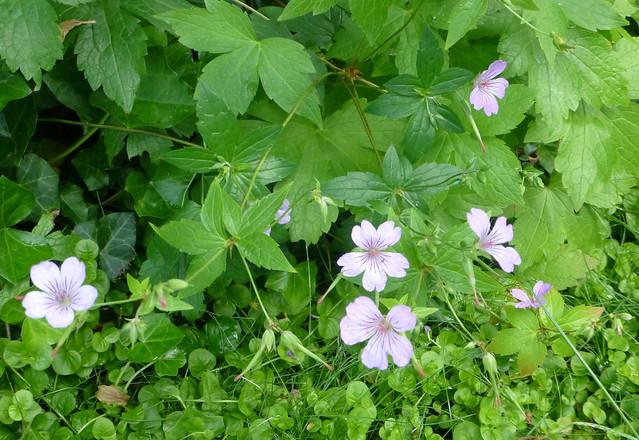 Sawyer's Flowers