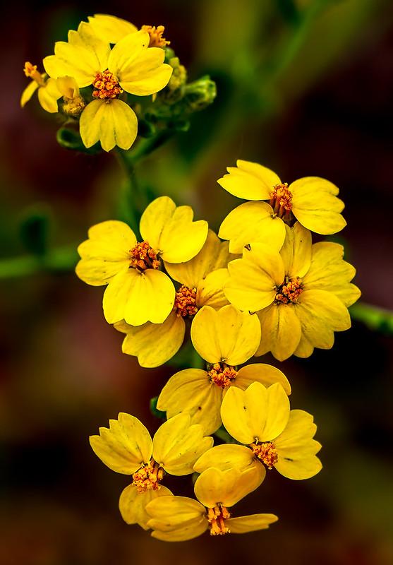 Wild-Flower-9-7D1-070719