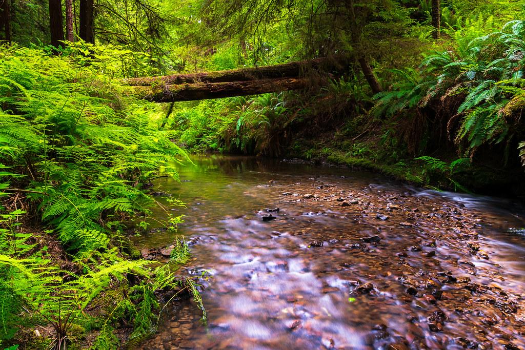 redwood stream