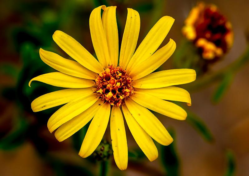 Wild-Flower-10-7D1-070719