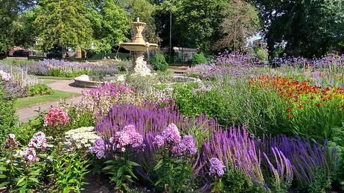 A visual experience of flowers and colours at the park.