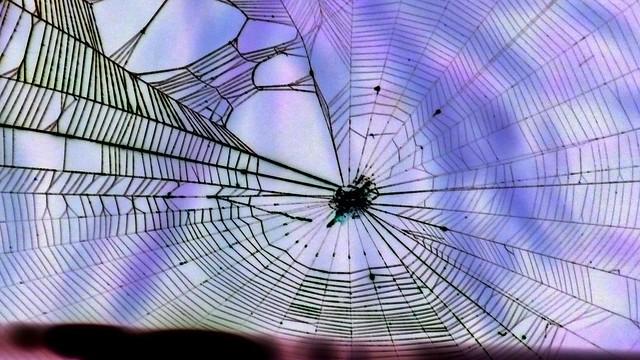 Spinnennetz mit Webfehler