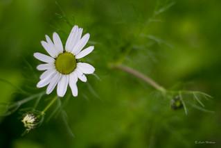 Blomster-8