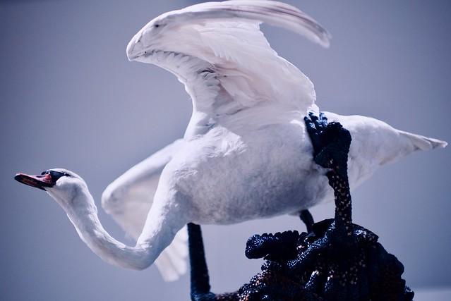 Skeleton and Swan