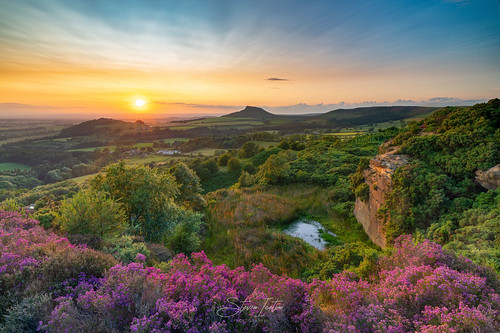 heather summer moors northyorkshire northyorkmoors