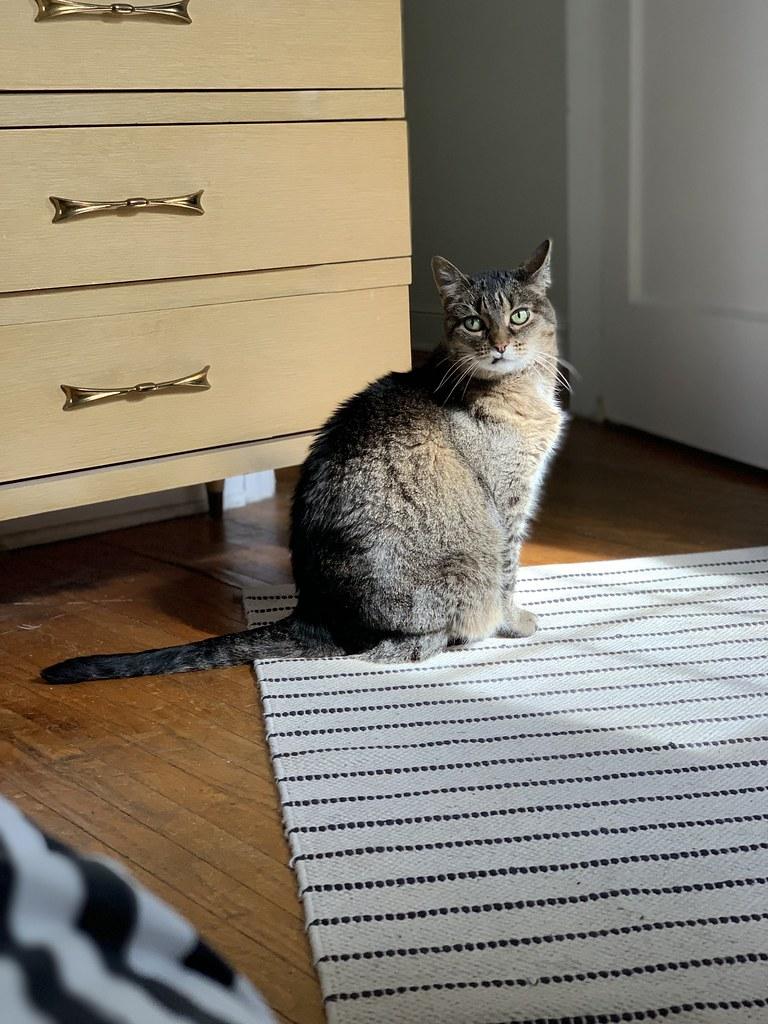 Olive, sunning herself