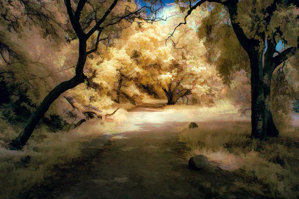 Shady Oak Trail - Textured IR Panatone