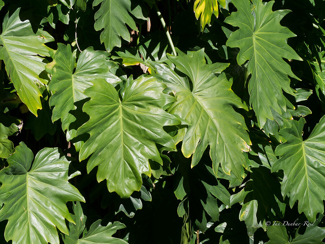 Sun drenched foliage