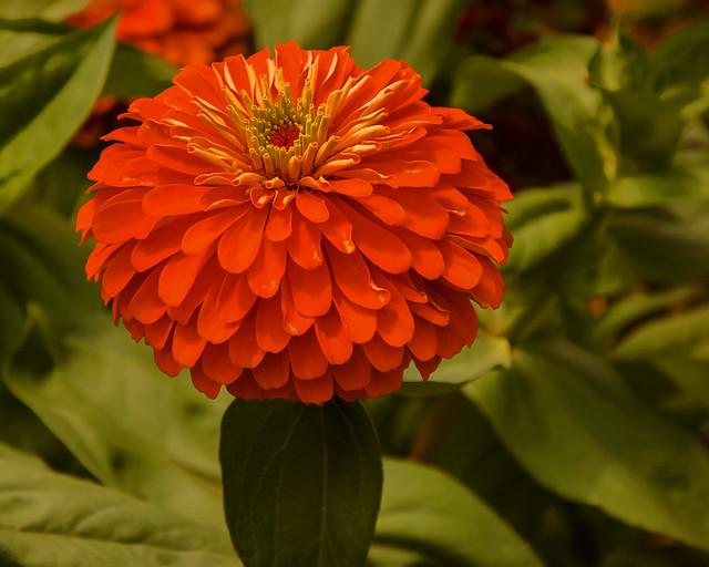 Frelinghuysen Flower_6102