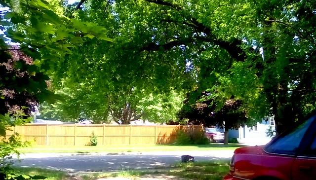 Neighborhood trees and fence - HFF Menominee Michigan