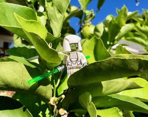 Jedi Consular (2)