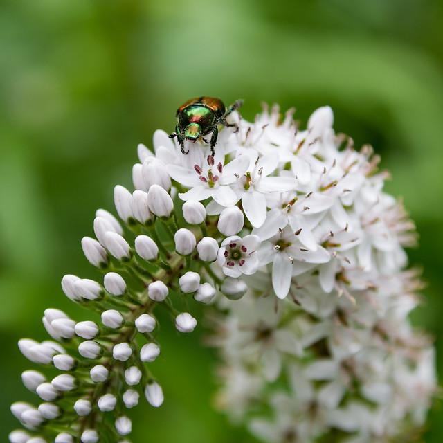 Pollen harvester