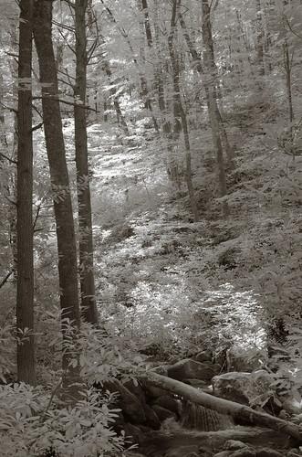 Shoal Mountain Creek