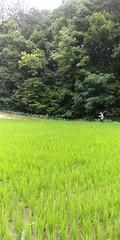 대박리 농장
