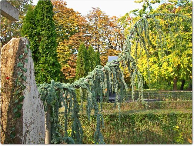 Creating nature in cemetery-Alkotó természet a temetőben