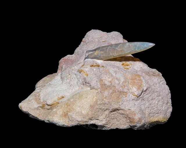 opalized Belemnite sp. - rostrum : 44 mm
