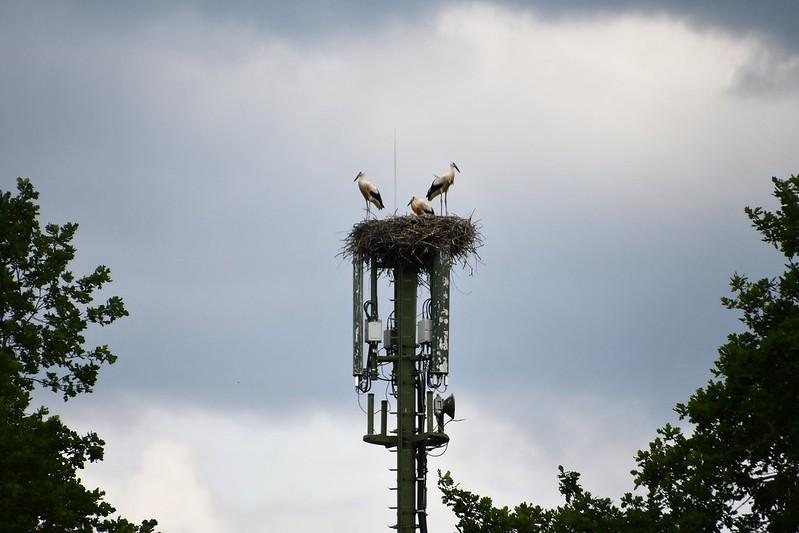 Storks 13.07 (1)