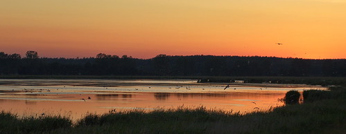2019 usedom achterwasser sonnenuntergang abendstimmung himmel natur nature coast sunset sky