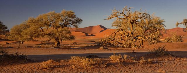 Morning light in Namib desert