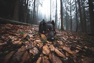 In the forest.
