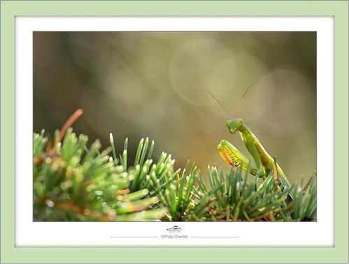 45 Flickr Photo Sharing