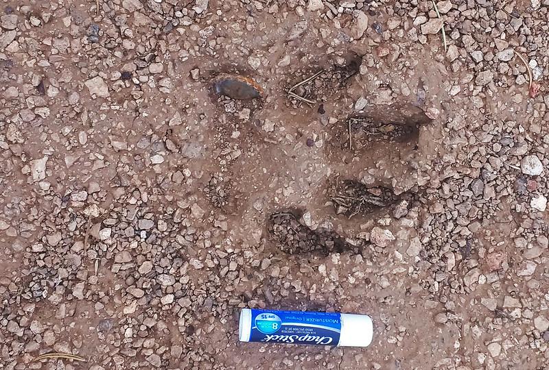 Cat-track-