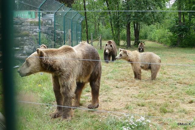 07-Balu, Tibor,Suse, Ledia oder Aurora