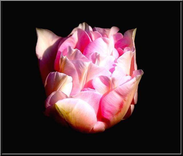 Au jardin des plantes. - Page 2 48274825797_3febc1312c_z